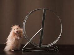Hamster (Bild: shutterstock.com/Von Tyler_D)